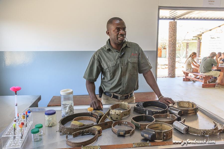 Clinique vétérinaire à Okonjima