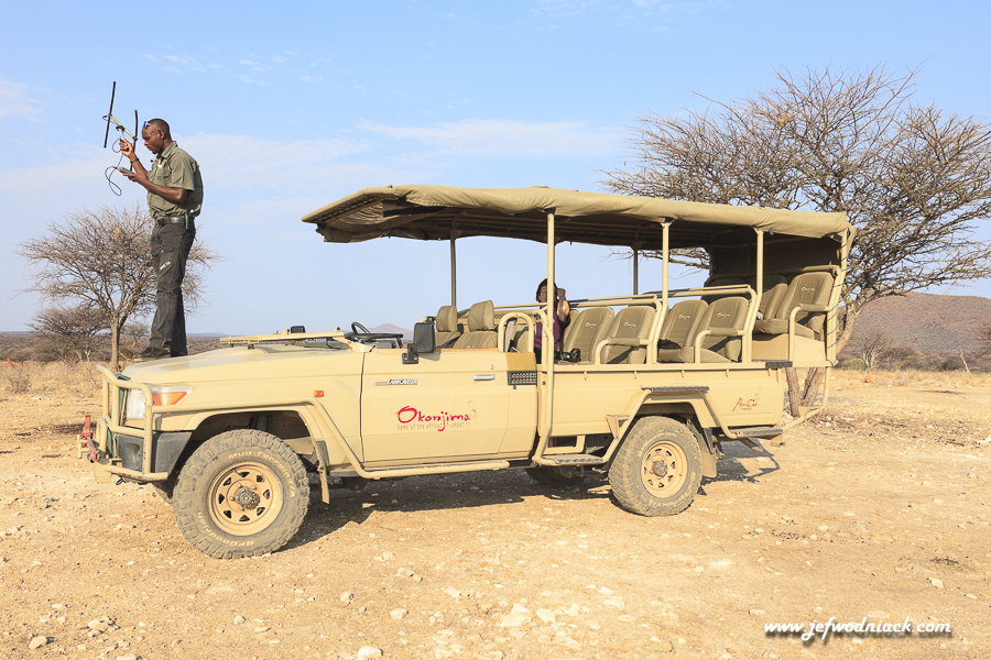 Tracking à Okonjima