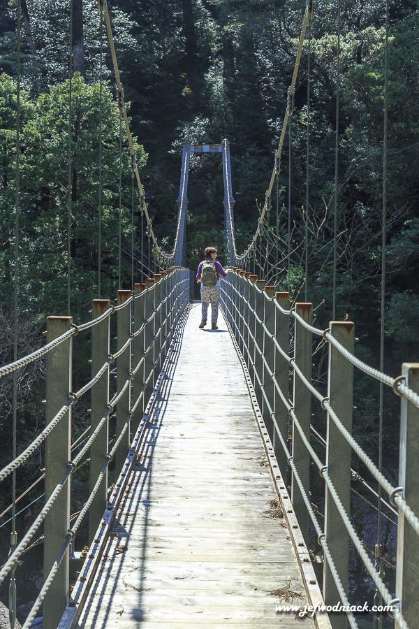 Japon: La forêt des mousses de Yakushima