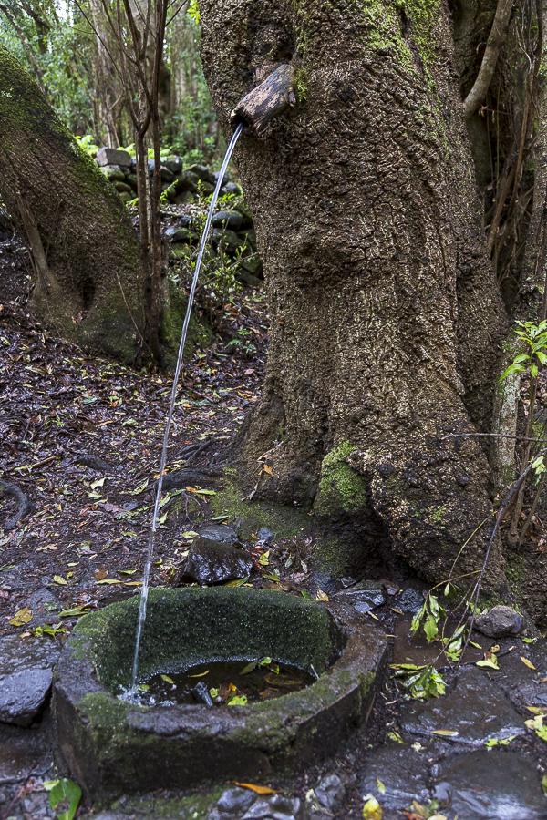 Une fontaine dans la forêt primaire de La Gomera