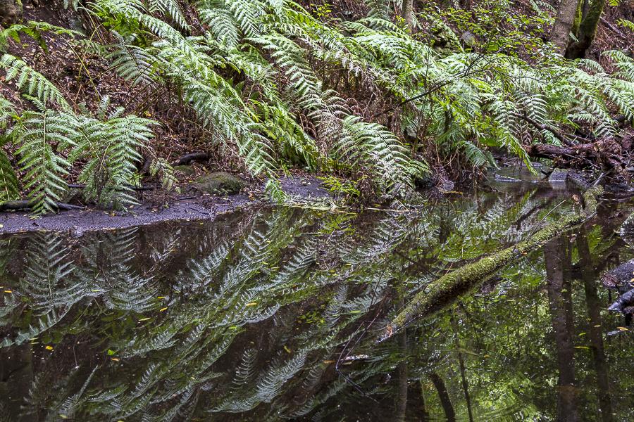 Forêt primaire de La Gomera